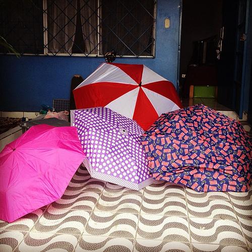 Umbrellas drying.