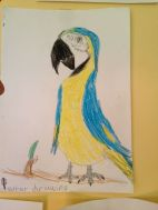 Yellow and blue macaw