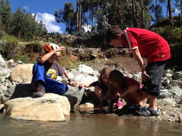 The kids looking trying to catch tadpoles.