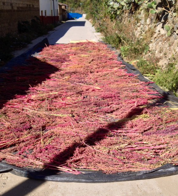 Quinoa drying on the road.