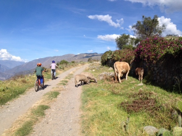 Road hazards.  We were riding up to a friends house.  His family has a long history in Curahuasi.  His uncle is the current mayor, and his grandfather was a previous mayor.  Their house is 200 years old and belonged to descendents of the original Spaniards who came to Peru.