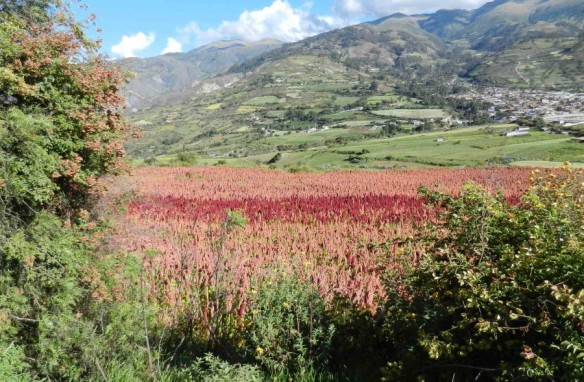 Peaceful fields around Curahuasi