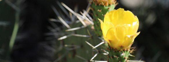 Blume-Curahuasi-DB-980x360