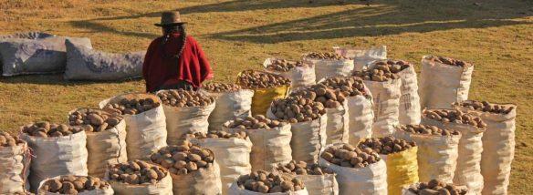 Quechuaindianerin-und-Kartoffel-JH-980x360